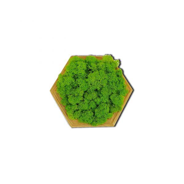 Mech chrobotek panele - heksagon