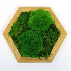 Mech chrobotek panele - żywy obraz w kształcie heksagonu